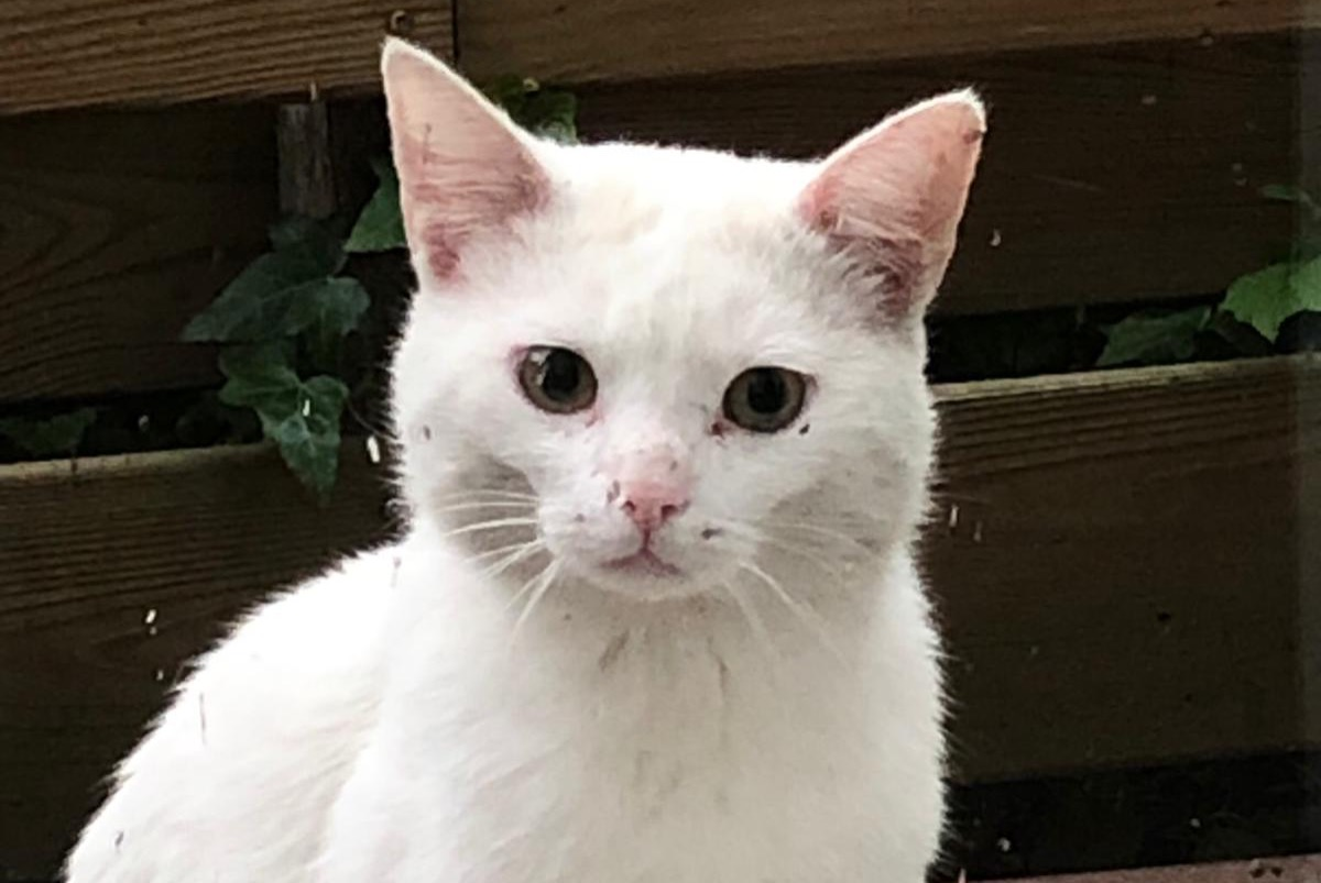 Discovery alert Cat  Male , 3 years Lelystad Netherlands