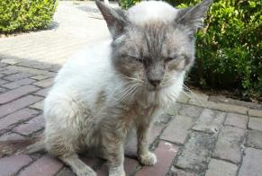Discovery alert Cat  Male , 10 years Westerwolde Netherlands