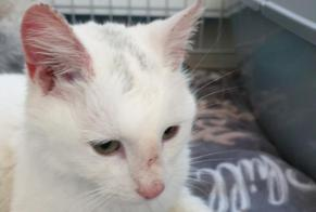 Discovery alert Cat Female Bergen (NH) Netherlands